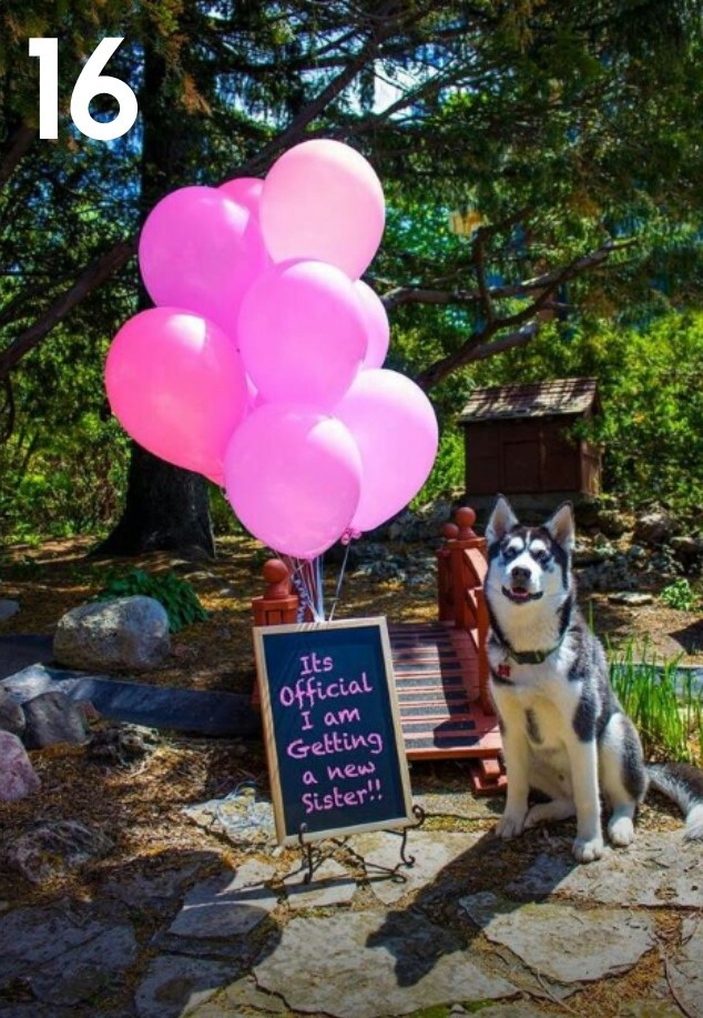 Best Ways to Use Your Dog in a Gender Reveal