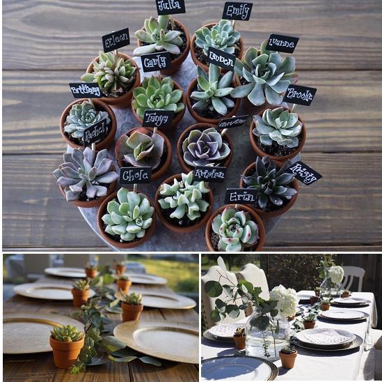 Easy Bridal Shower Tips | Succulents | Succulent Place cards | Succulent Centerpieces