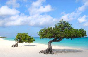 Planning a honeymoon | Aruba honeymoon