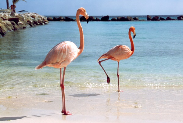 Autumn honeymoon destination | Aruba honeymoon