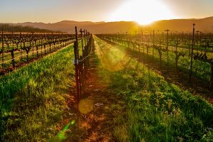 Fall honeymoon | Napa honeymoon