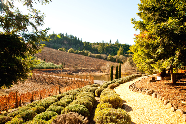 Healdsburg | U.S. honeymoon