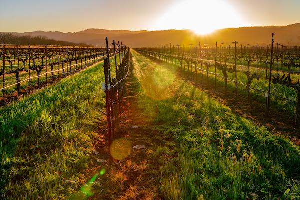 Top honeymoon destinations | Sonoma
