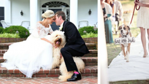You'll never forget having your best furry friends by your side as you celebrate your at-home wedding—plus, the pictures will be that much better!