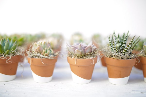Succulent - Wedding Favor