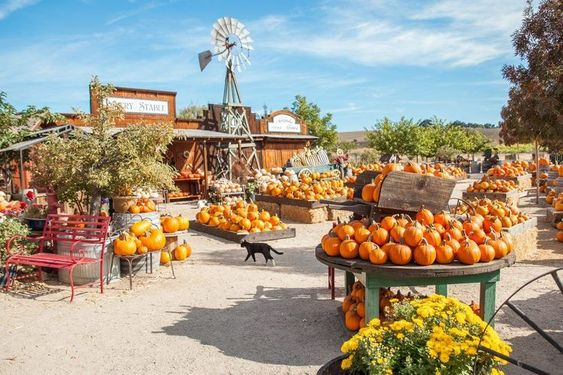 pumpkin patch baby shower location